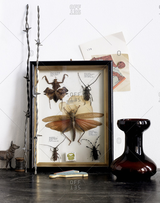 Insect collection mounted in a frame and displayed on a table