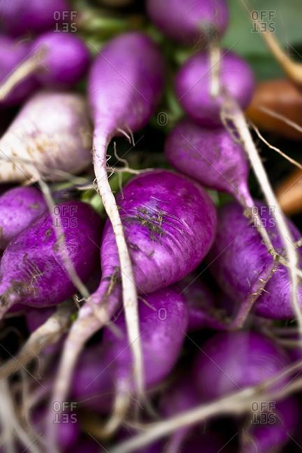 Close-up view of purple radish