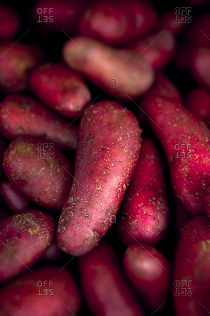 Close-up view of fingerling potatoes