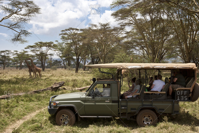 4-wheel vehicle with full of tourists and a pair of Masai giraffe in the background