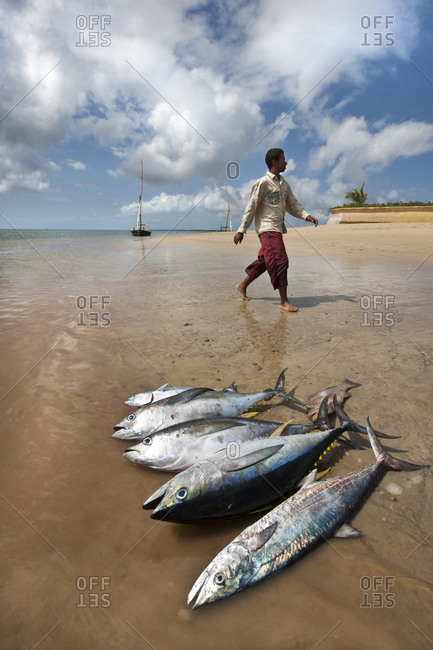 Daily catch on a beach in Kenya