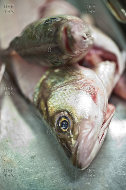 Raw trouts prepared for cooking