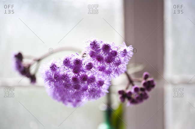 Purple flowers in vase placed by sunny window