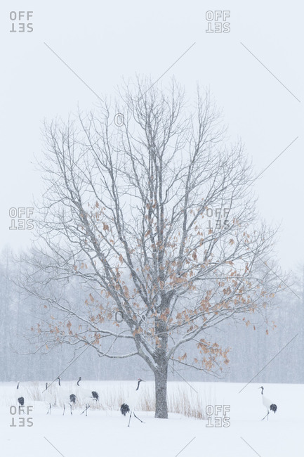 A line of frozen trees in the winter with cranes