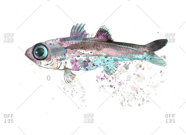 A bulls-eye fish