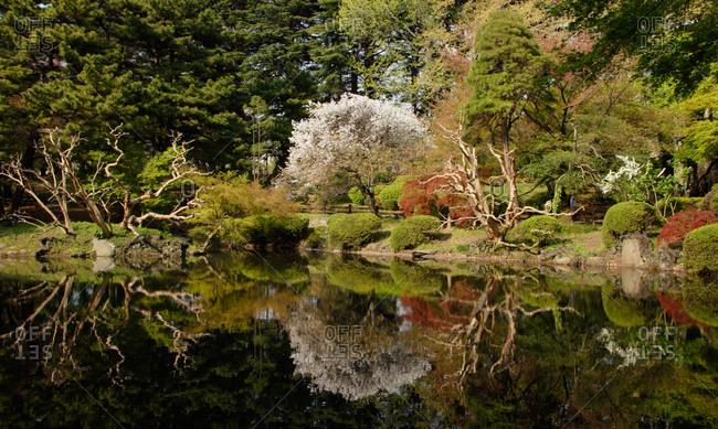 A garden landscape in japan