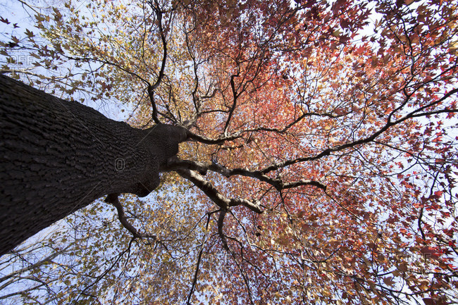 A view of A tree from the ground