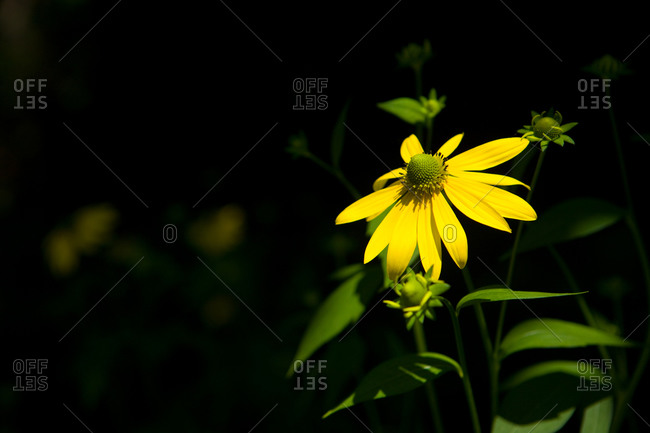 A view of A  yellow flower