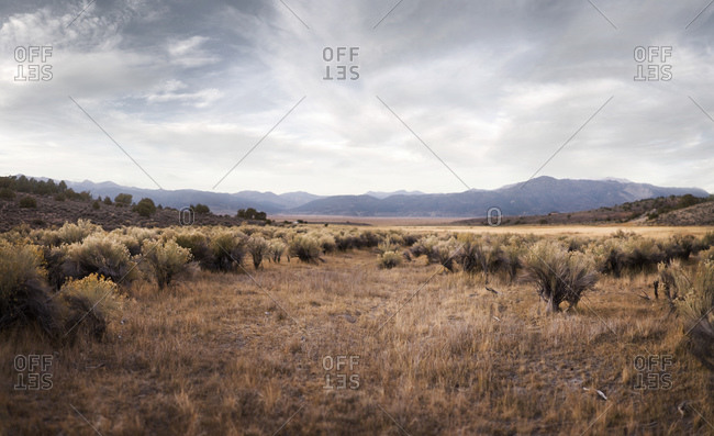 Sara Landscape