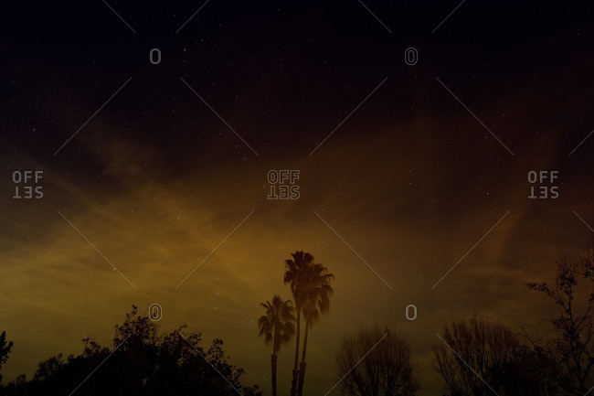 Silhouetted palm trees and plants with starry sky in the background