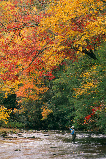 Autumn fly fishing on the Davidson River, North Carolina