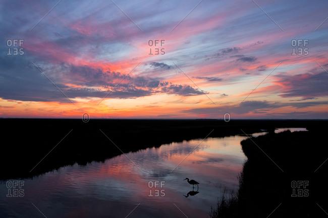 Wading Egret at sunset in Harbor Island, South Carolina