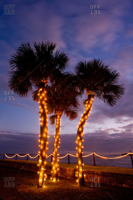 Palmetto trees adorned with Christmas lights in Saint Augustine, Florida, USA
