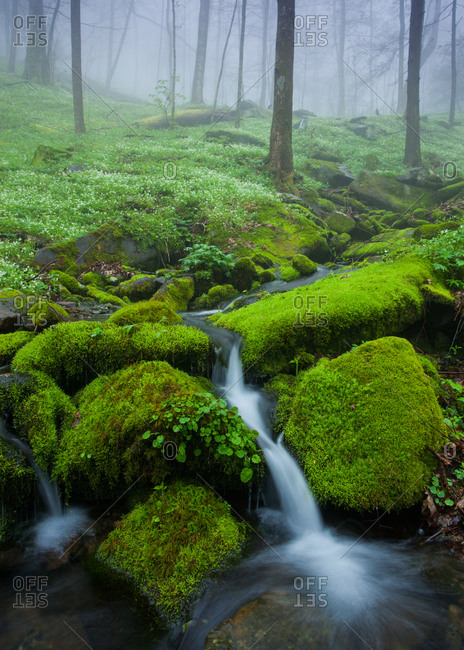 Spring in Great Smoky Mountains National Park, Tennessee