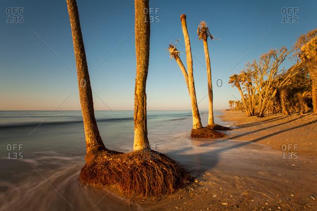 Beach erosion, Botany Bay Wildlife Management Area, Edisto Island, South Carolina