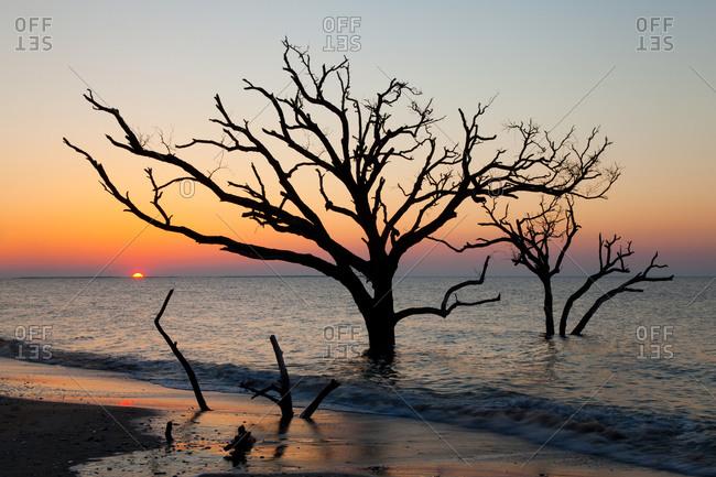Botany Bay sunrise at Editsto Island, South Carolina