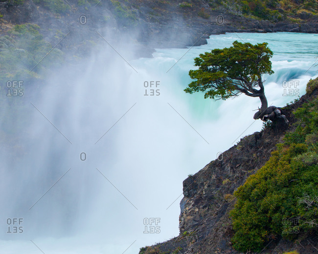 Lenga Tree and Salto Grande at Torres del Paine National Park, Chile