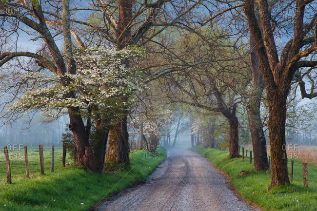 Sparks Lane in Cades Cove on a foggy spring morning, at Great Smoky Mountains National Park, Tennessee