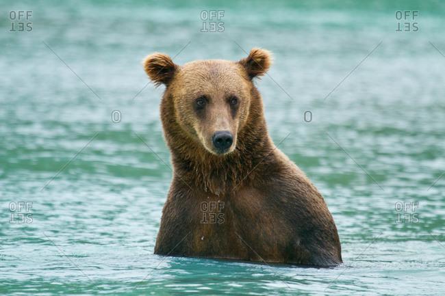 Bear necessity at Lake Clark National Park, Alaska