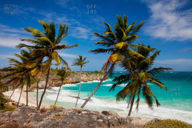 Palm trees on Harrismith Beach on the southeast coast of Barbados