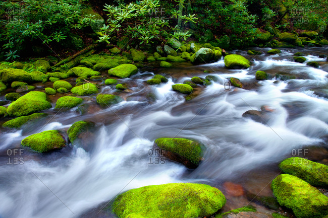 Spring flowing on Roaring Fork in Great Smoky Mountains National Park, Tennessee
