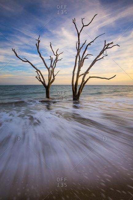 Trees in surf at Botany Bay in South Carolina, USA