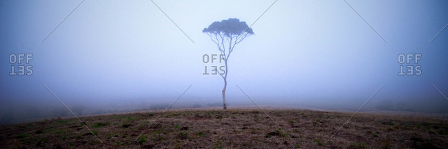 A lone tree pokes out on one foggy morning in the Adelaide Hills
