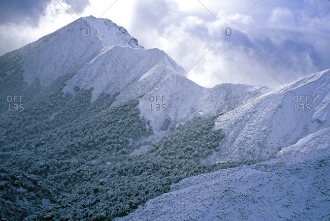 Snow on rainforest in New Zealand