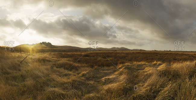 Puma Landscape