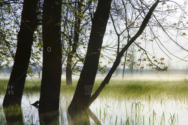 Spring Morning In Wetland