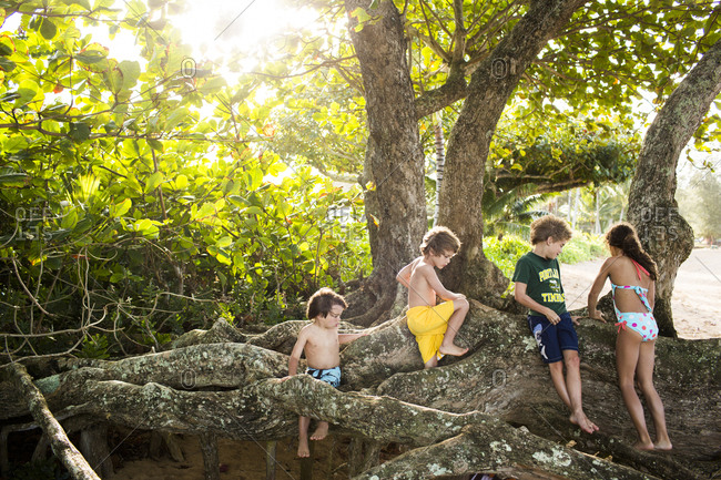 A group of children play among the roots of a tree on the beach