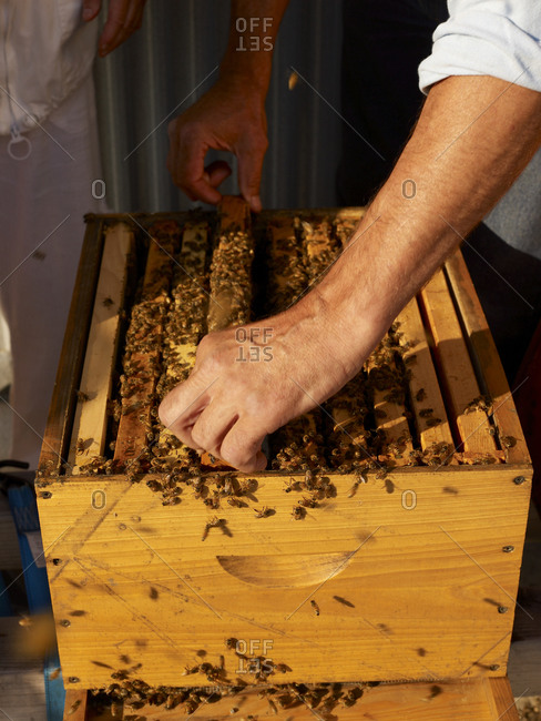 Box of busy bees