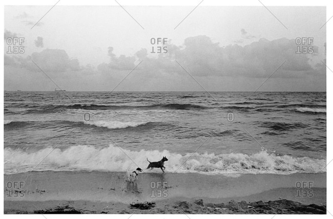 Two dogs enjoying the waves on the beach