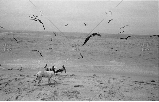 Dog on the beach with birds
