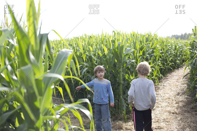 Cheerful kids playing in maize field.