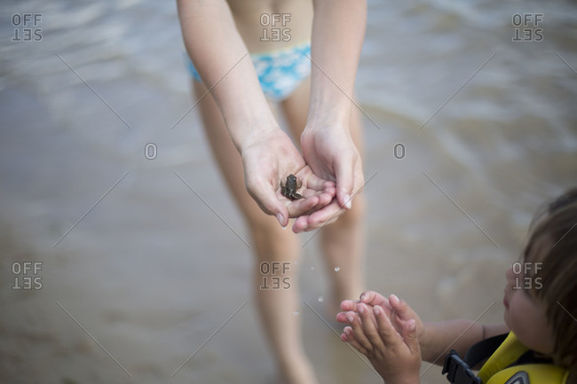 High-angle view of small frog in child's hand.