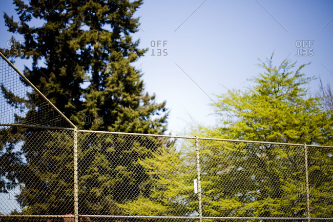 Pine trees behind of fence