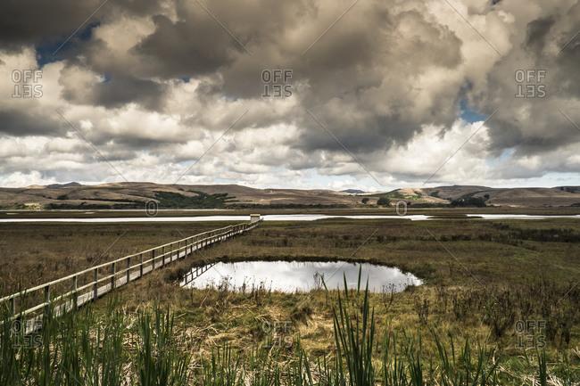 Wooden Walkway Over a Marshy Field