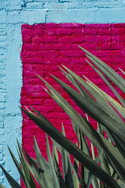 Spikey Cactus Plant in Front of Brightly Painted Wall
