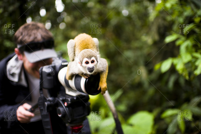 Monkey sitting on camera of photographer in Ecuador