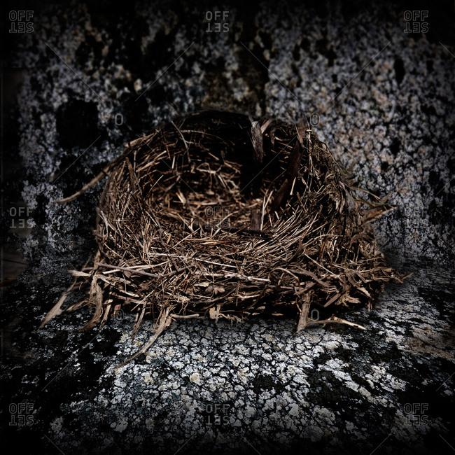 Birds nest in textured background