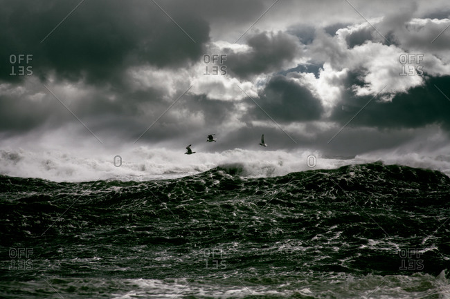 Seagulls flying over stormy waters