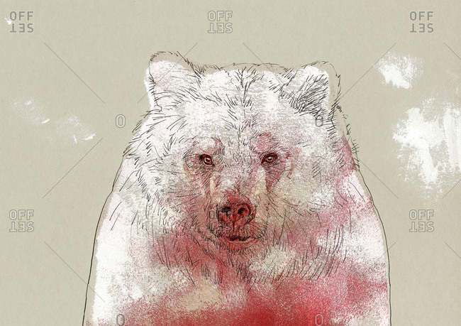 Portrait of a  bear