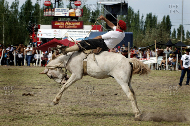 A Gaucho Demonstrating How To Tame Wild Horses Picture At The Salto De La Rosas Gaucho/Rodeo Show