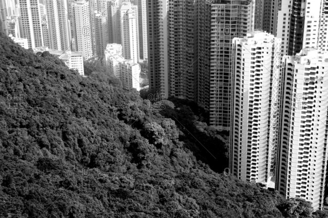 View Of Cityscape And Forest From The Peak In Hong Kong