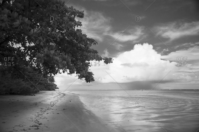 Black and white landscape at the beach of Ilha Boipeba, Brazil