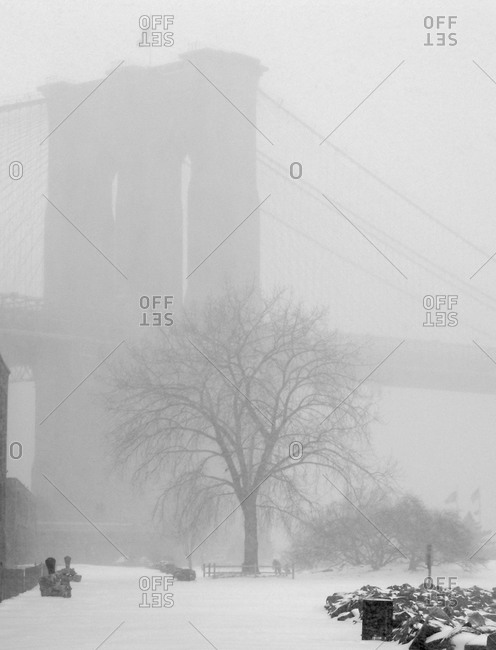 Tower of Brooklyn Bridge and Tree In Snow