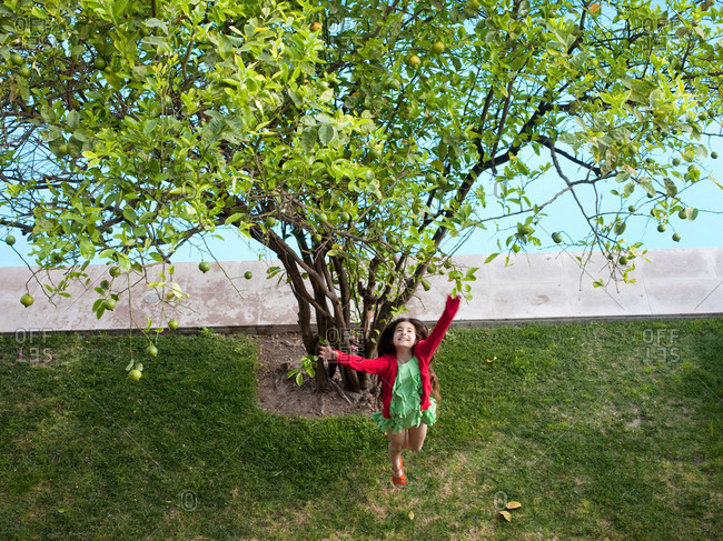 Young girl jumps up to get a Lime from a Lime tree