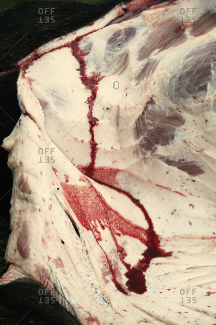 Close up of a butchered pig
