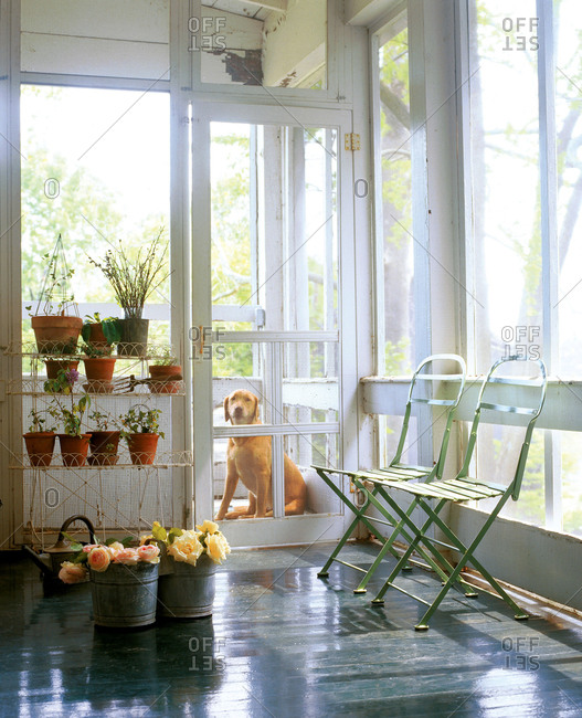 Screened porch with dog waiting by door